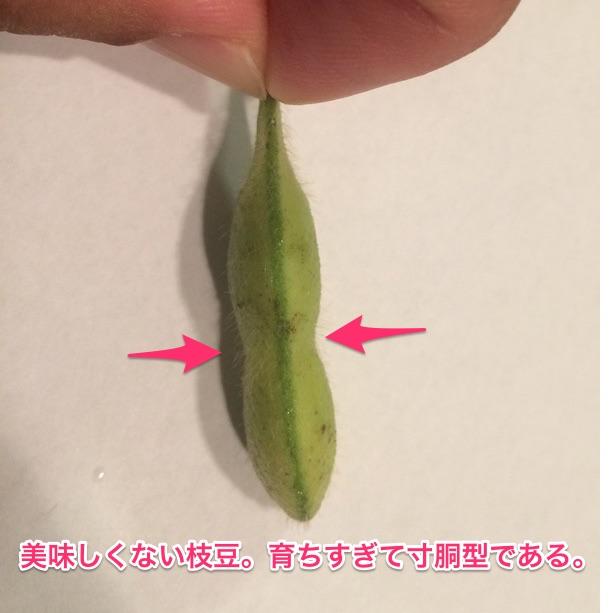 美味しくない枝豆の事例。育ちすぎていて寸胴である